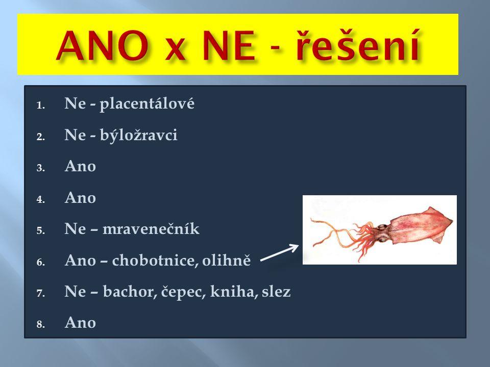 ANO x NE - řešení Ne - placentálové Ne - býložravci Ano