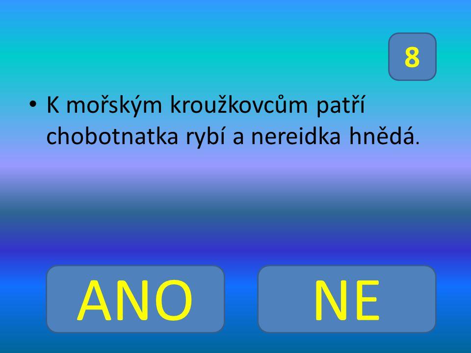 K mořským kroužkovcům patří chobotnatka rybí a nereidka hnědá.