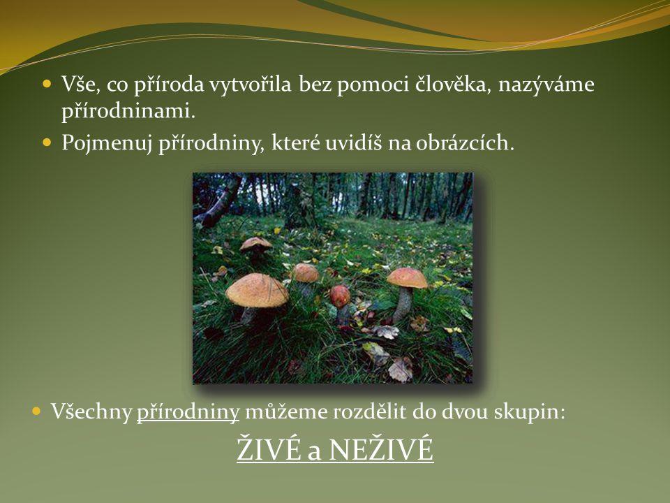 Vše, co příroda vytvořila bez pomoci člověka, nazýváme přírodninami.