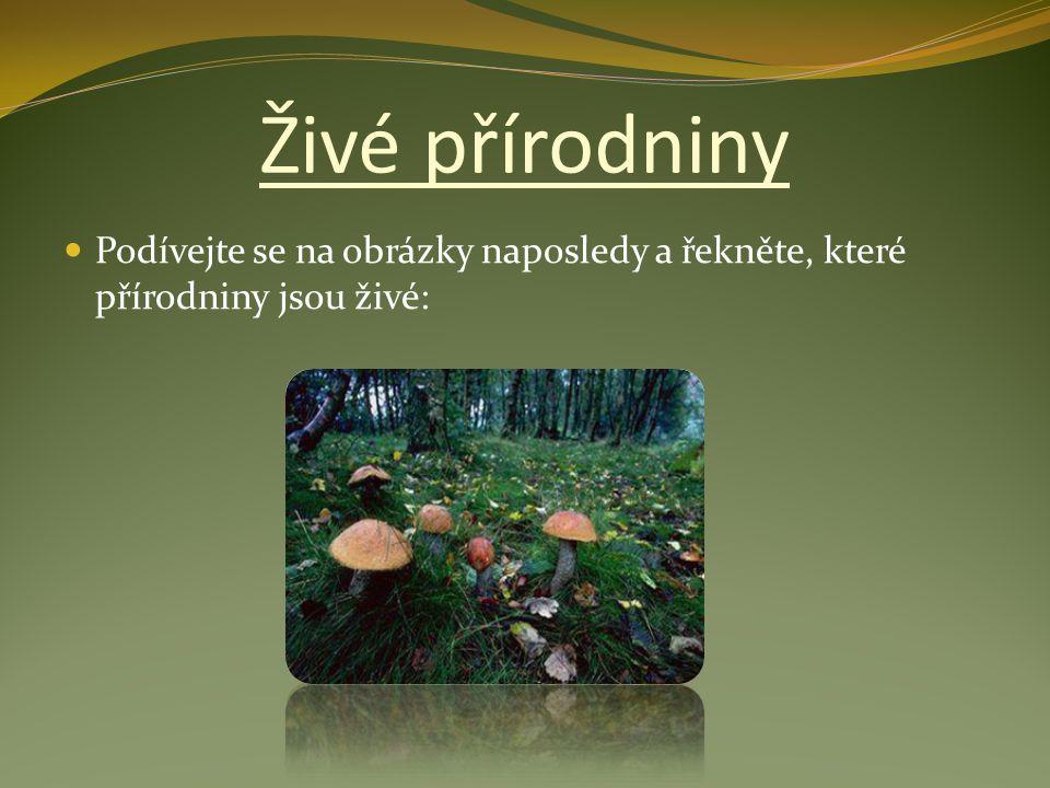Živé přírodniny Podívejte se na obrázky naposledy a řekněte, které přírodniny jsou živé: