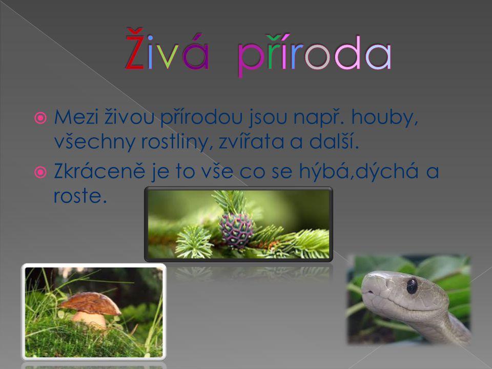 Živá příroda Mezi živou přírodou jsou např. houby, všechny rostliny, zvířata a další.