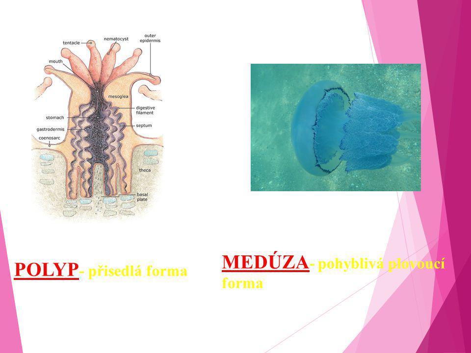 MEDÚZA- pohyblivá plovoucí forma