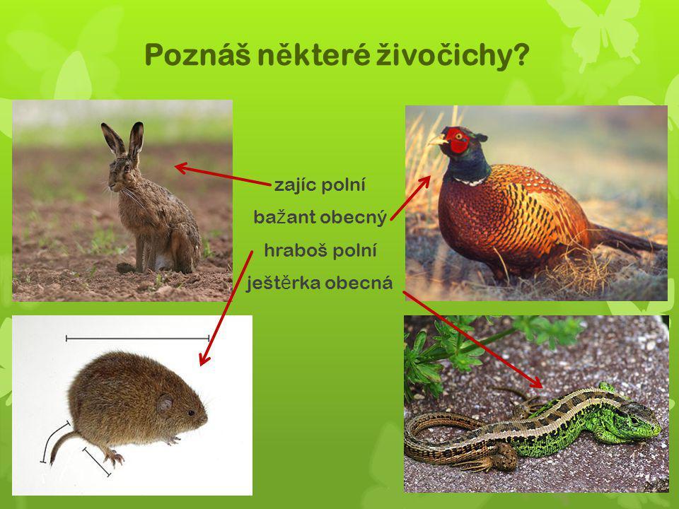 Poznáš některé živočichy