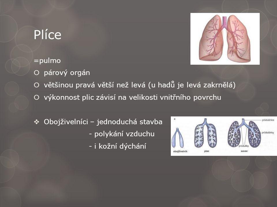 Plíce =pulmo párový orgán