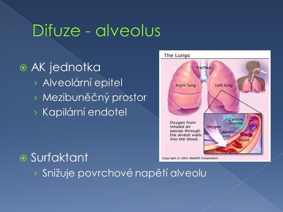 Difuze - alveolus AK jednotka Surfaktant Alveolární epitel