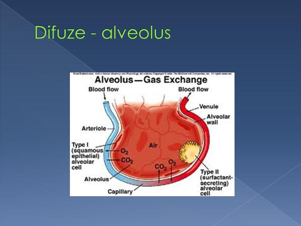 Difuze - alveolus