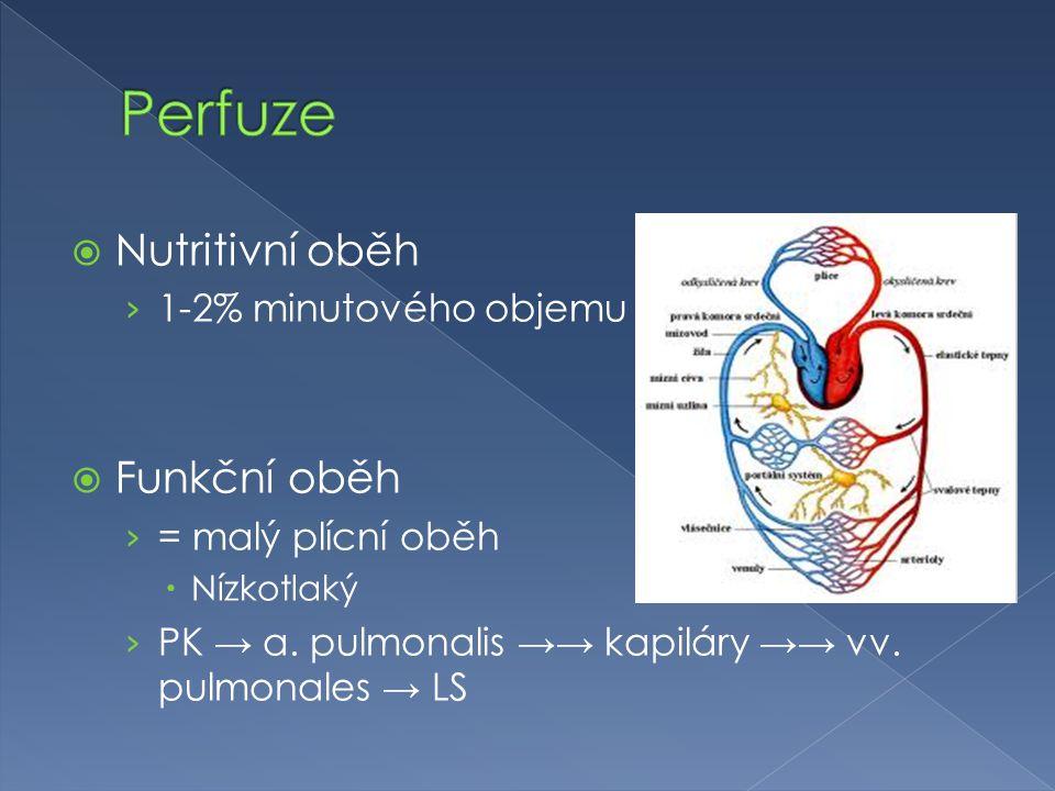 Perfuze Nutritivní oběh Funkční oběh 1-2% minutového objemu