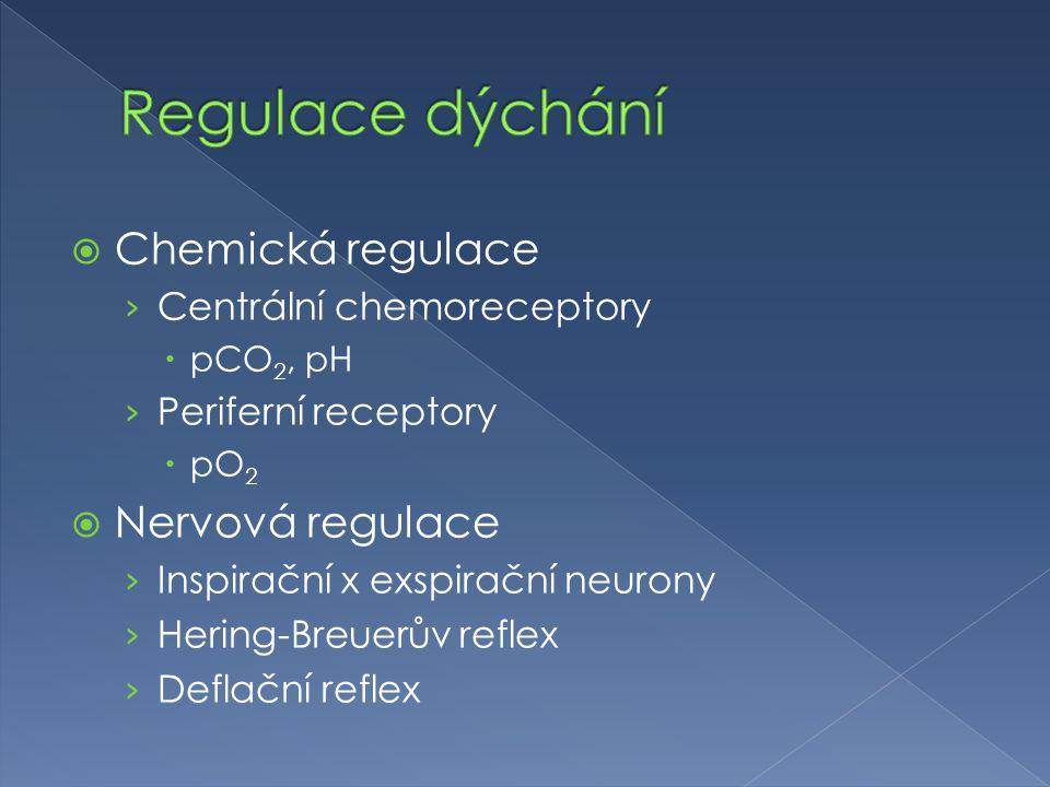 Regulace dýchání Chemická regulace Nervová regulace