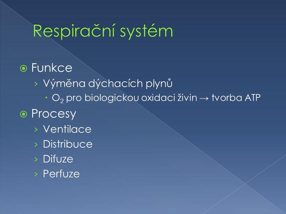 Respirační systém Funkce Procesy Výměna dýchacích plynů Ventilace