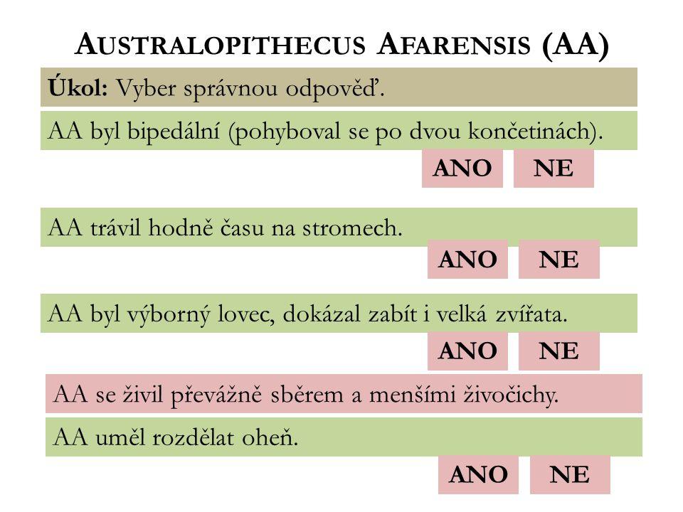 Australopithecus Afarensis (AA)