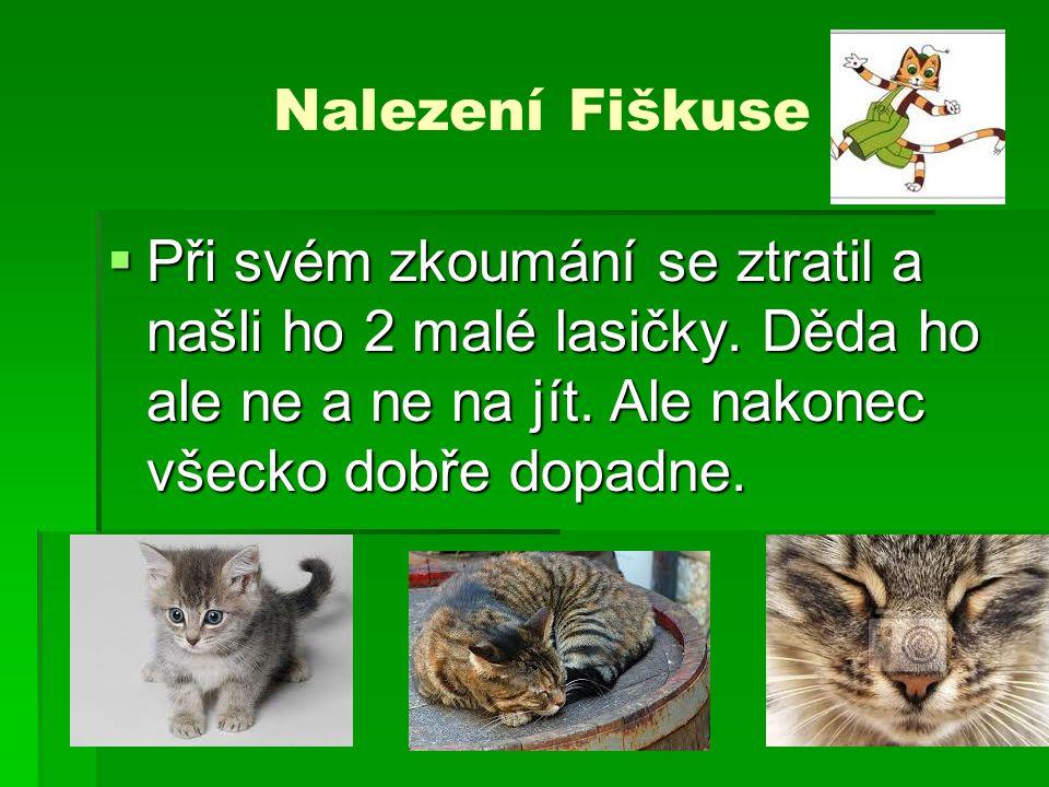 Nalezení Fiškuse Při svém zkoumání se ztratil a našli ho 2 malé lasičky.