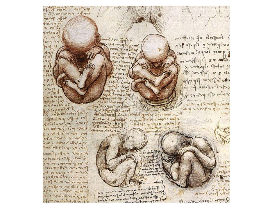 Lidský plod v různých fázích vývoje
