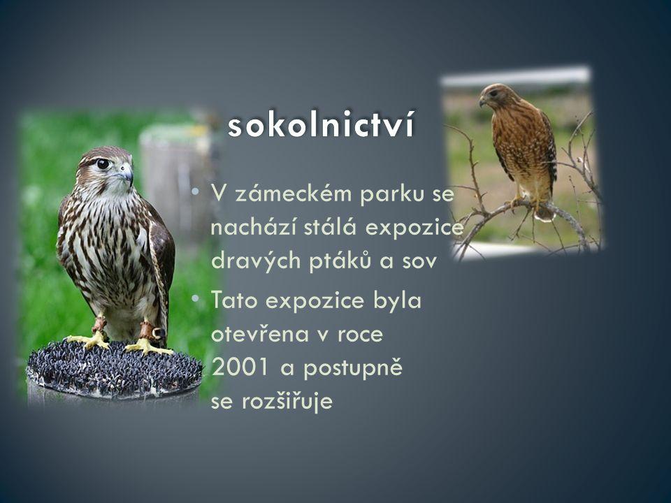 sokolnictví V zámeckém parku se nachází stálá expozice dravých ptáků a sov.