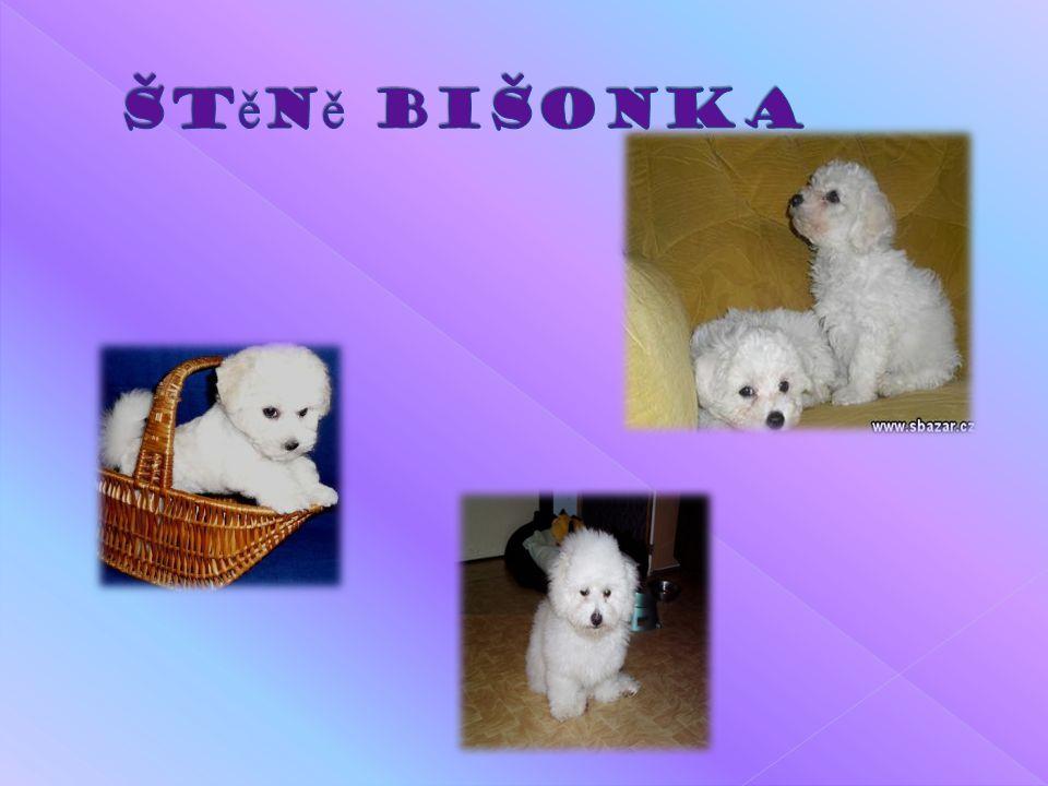 Štěně Bišonka