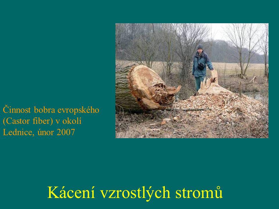 Kácení vzrostlých stromů