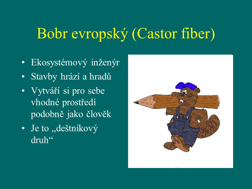 Bobr evropský (Castor fiber)