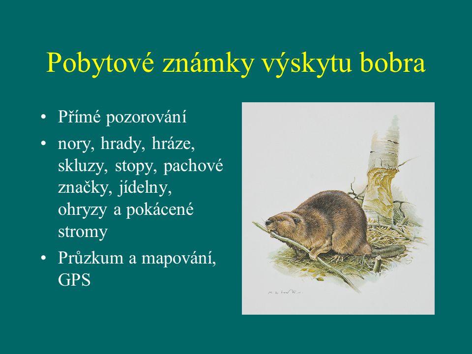 Pobytové známky výskytu bobra