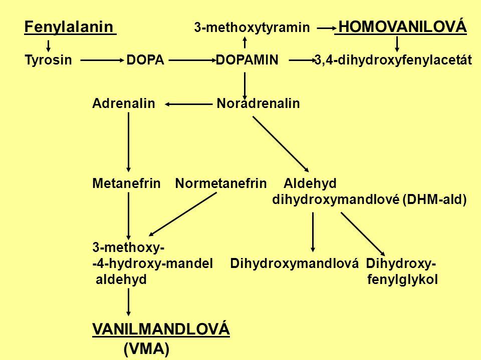Fenylalanin 3-methoxytyramin HOMOVANILOVÁ