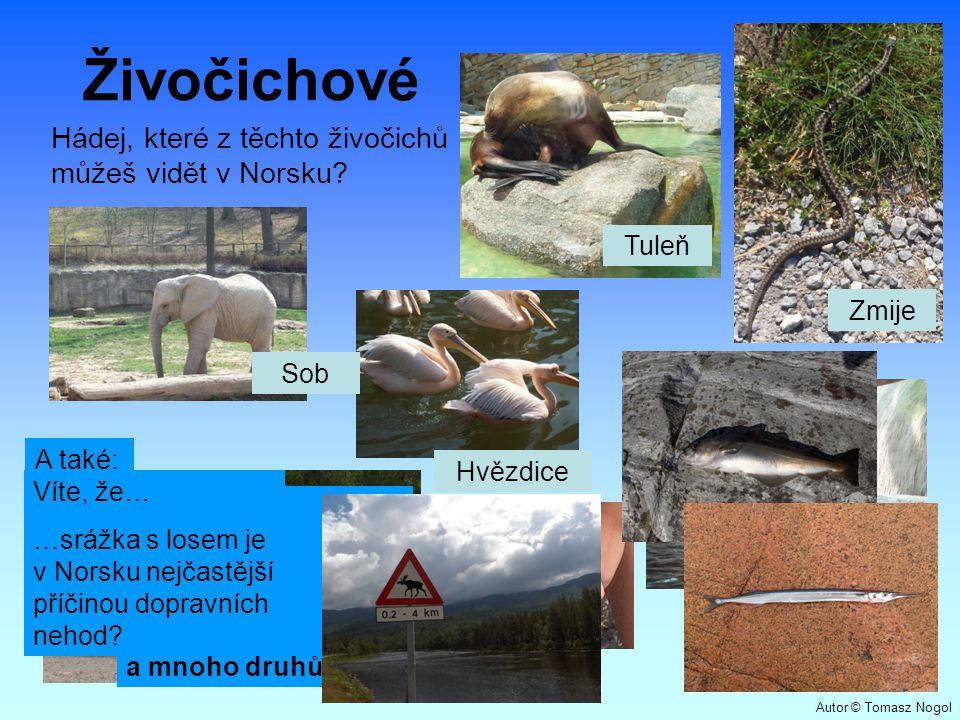 Živočichové Hádej, které z těchto živočichů můžeš vidět v Norsku