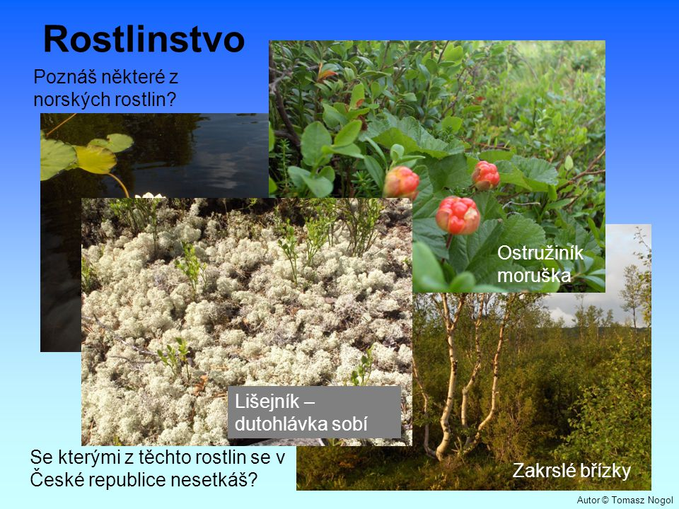 Rostlinstvo Poznáš některé z norských rostlin Ostružiníkmoruška
