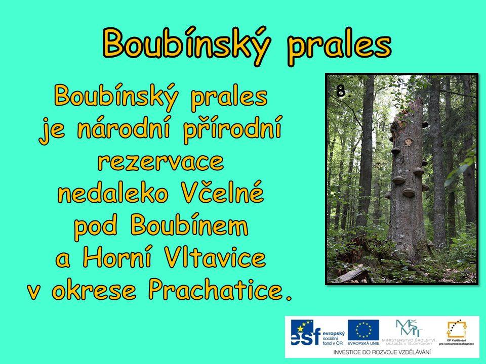 Boubínský prales Boubínský prales je národní přírodní rezervace