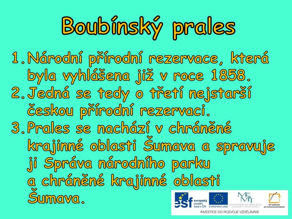 Boubínský prales Národní přírodní rezervace, která byla vyhlášena již v roce 1858. Jedná se tedy o třetí nejstarší českou přírodní rezervaci.