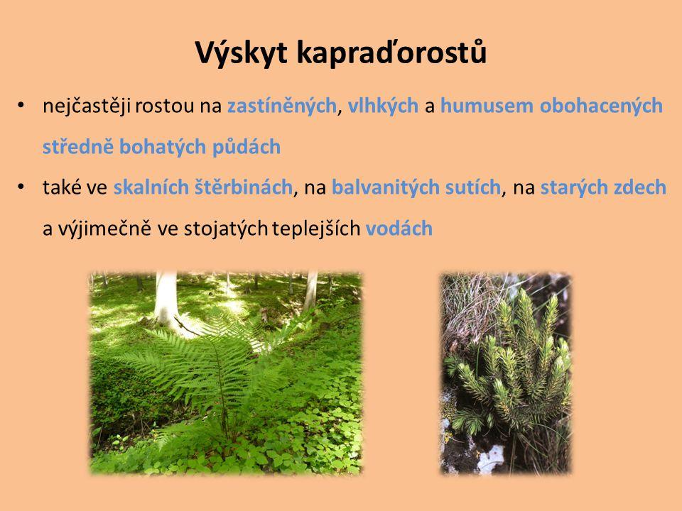 Výskyt kapraďorostů nejčastěji rostou na zastíněných, vlhkých a humusem obohacených. středně bohatých půdách.