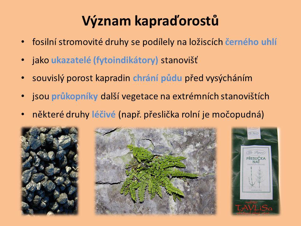 Význam kapraďorostů fosilní stromovité druhy se podílely na ložiscích černého uhlí. jako ukazatelé (fytoindikátory) stanovišť.