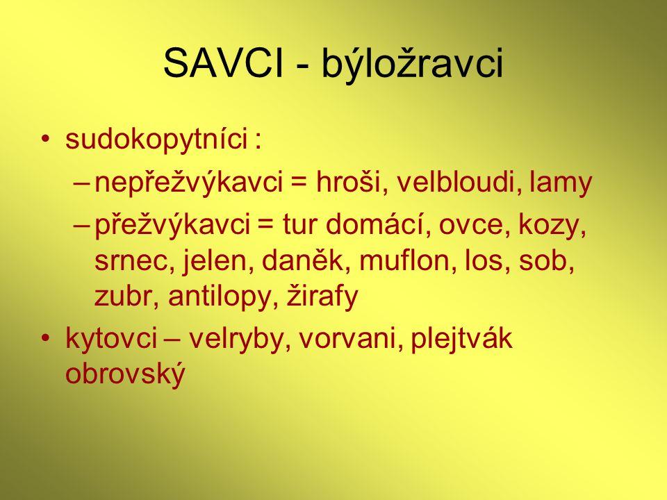 SAVCI - býložravci sudokopytníci :