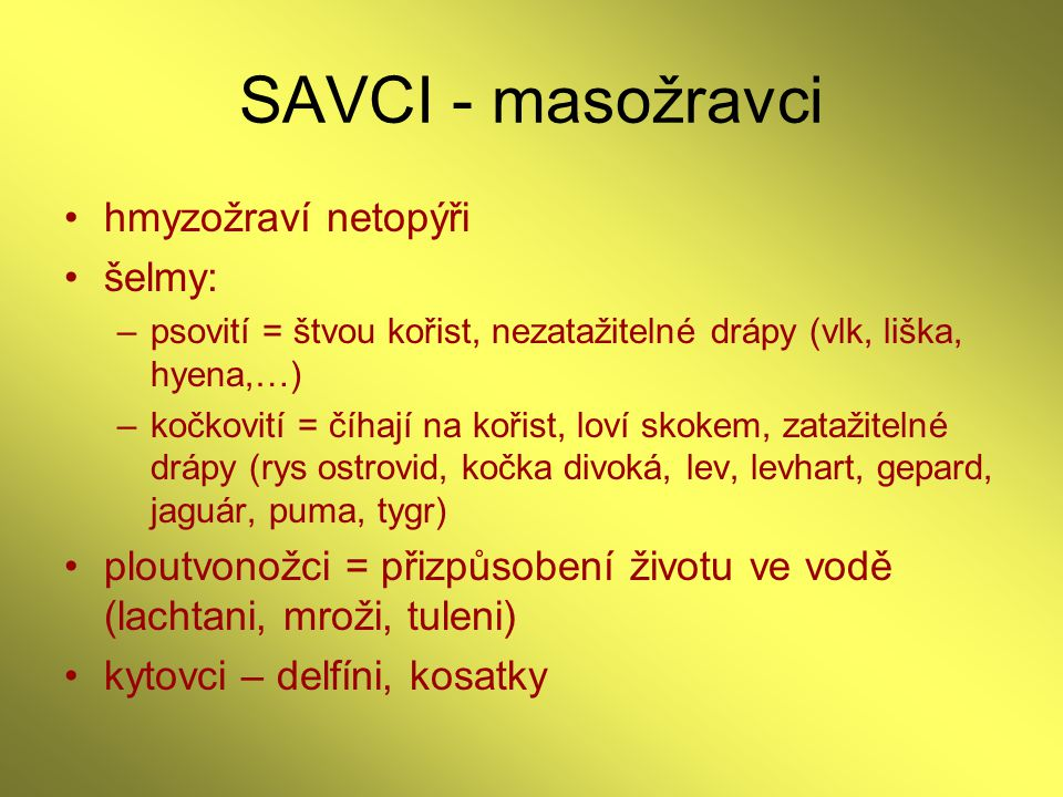 SAVCI - masožravci hmyzožraví netopýři šelmy: