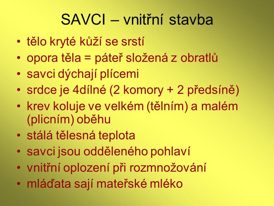 SAVCI – vnitřní stavba tělo kryté kůží se srstí