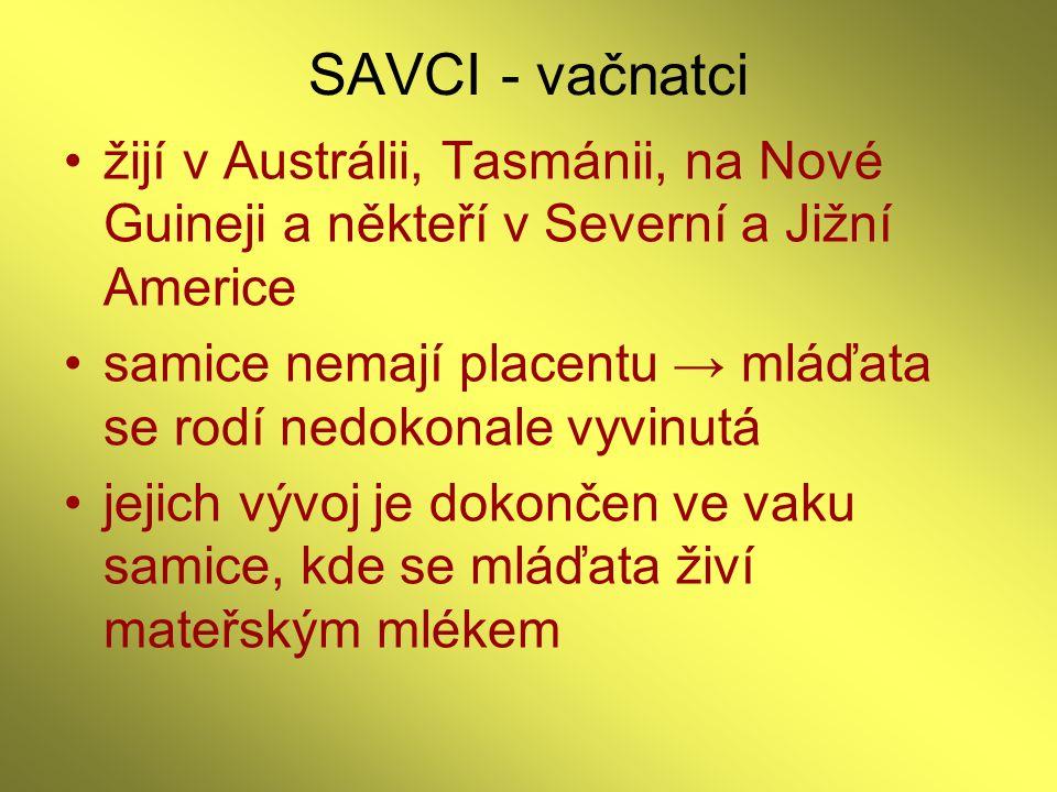 SAVCI - vačnatci žijí v Austrálii, Tasmánii, na Nové Guineji a někteří v Severní a Jižní Americe.