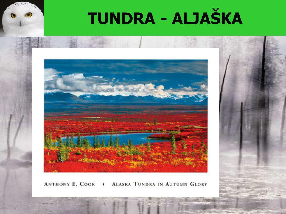 TUNDRA - ALJAŠKA