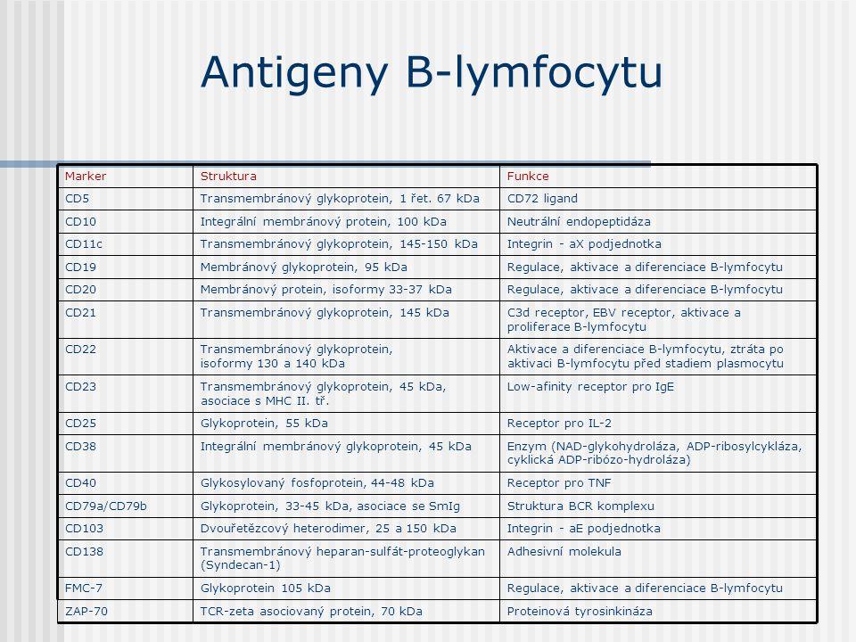Antigeny B-lymfocytu Proteinová tyrosinkináza