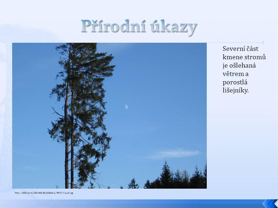 Přírodní úkazy Severní část kmene stromů je ošlehaná větrem a porostlá lišejníky.