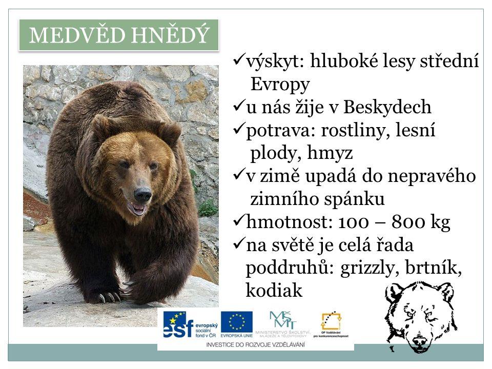 MEDVĚD HNĚDÝ výskyt: hluboké lesy střední Evropy