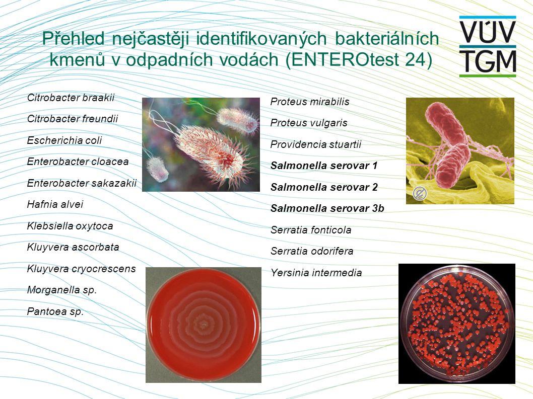 Přehled nejčastěji identifikovaných bakteriálních kmenů v odpadních vodách (ENTEROtest 24)