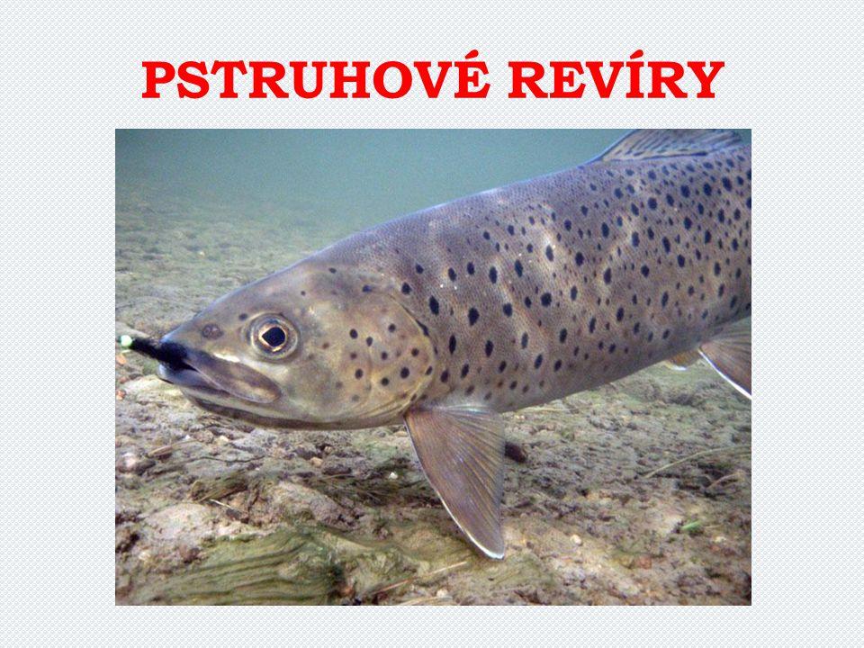 PSTRUHOVÉ REVÍRY