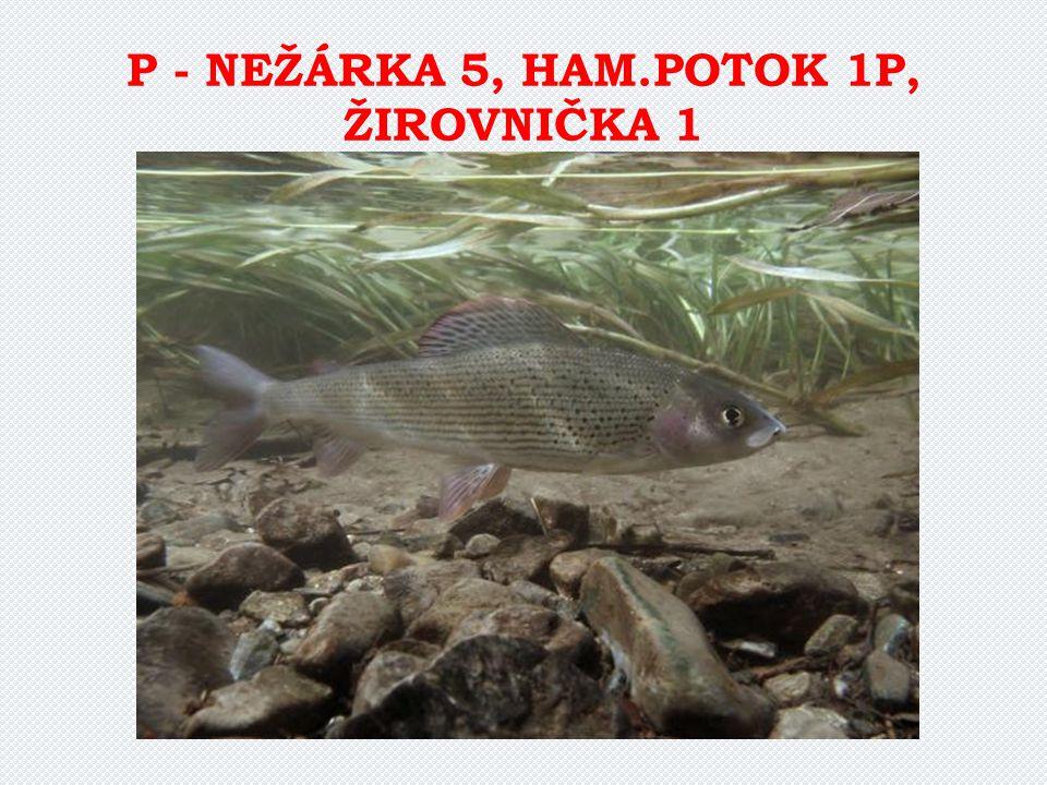P - NEŽÁRKA 5, HAM.POTOK 1P, ŽIROVNIČKA 1