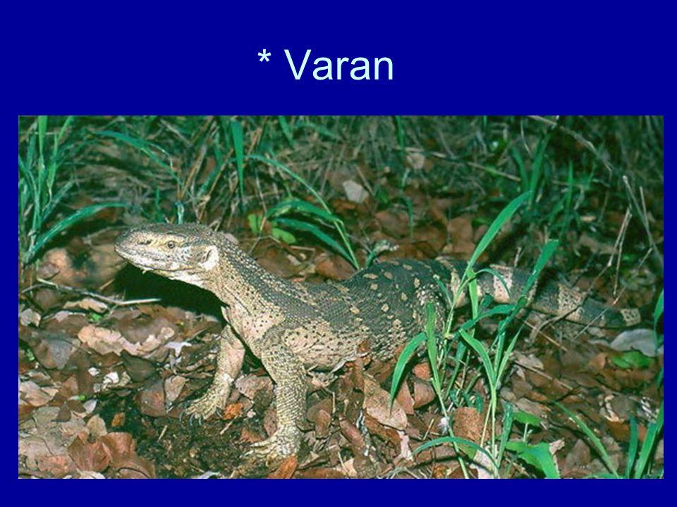 * Varan