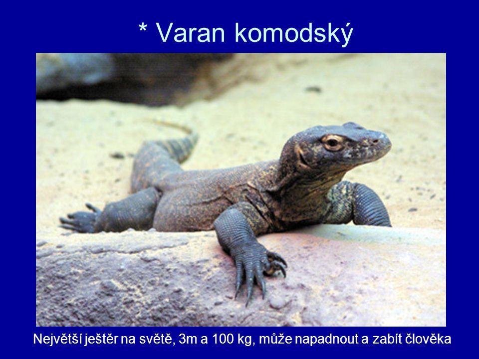 * Varan komodský Největší ještěr na světě, 3m a 100 kg, může napadnout a zabít člověka