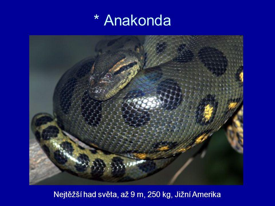 * Anakonda Nejtěžší had světa, až 9 m, 250 kg, Jižní Amerika