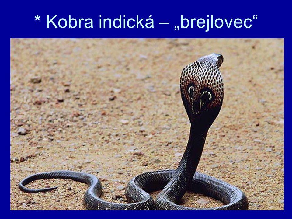 "* Kobra indická – ""brejlovec"