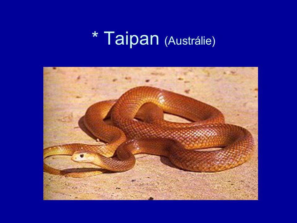 * Taipan (Austrálie)