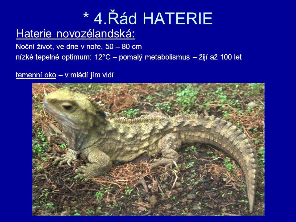 * 4.Řád HATERIE Haterie novozélandská: