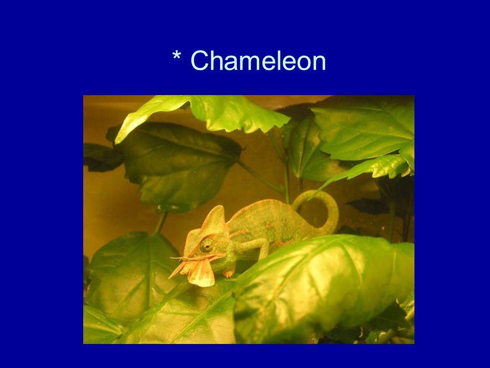 * Chameleon