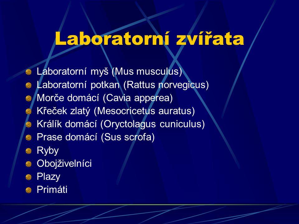 Laboratorní zvířata Laboratorní myš (Mus musculus)