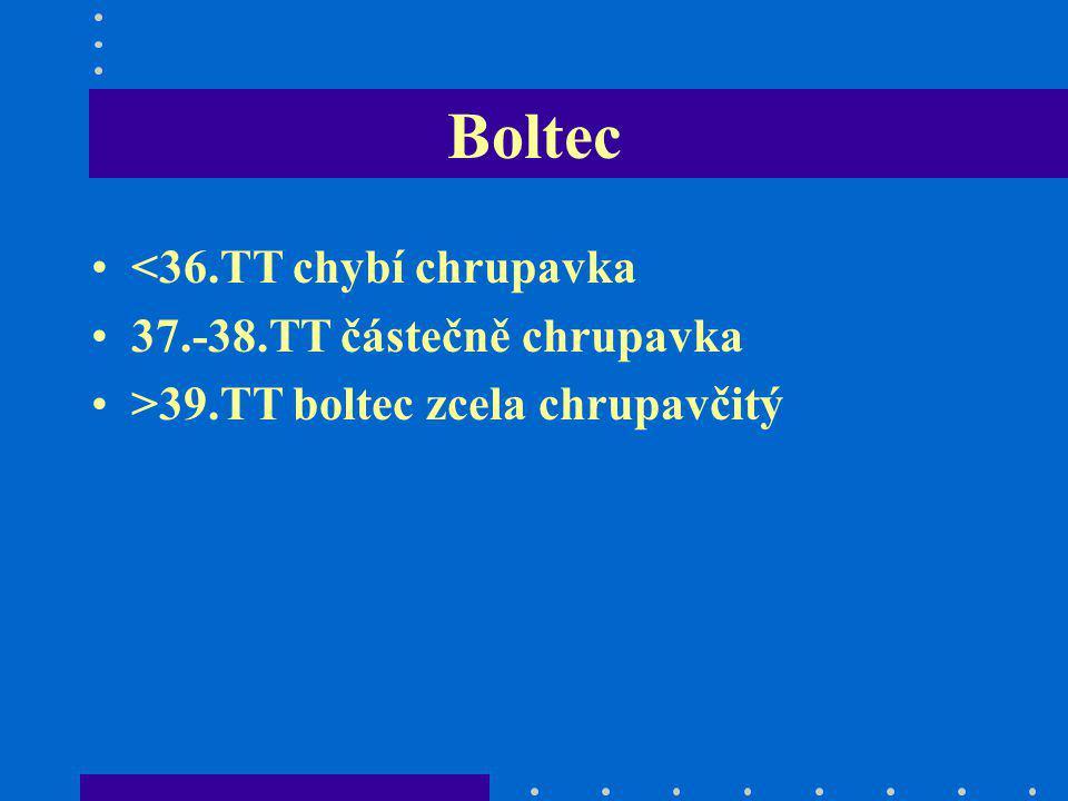 Boltec <36.TT chybí chrupavka 37.-38.TT částečně chrupavka