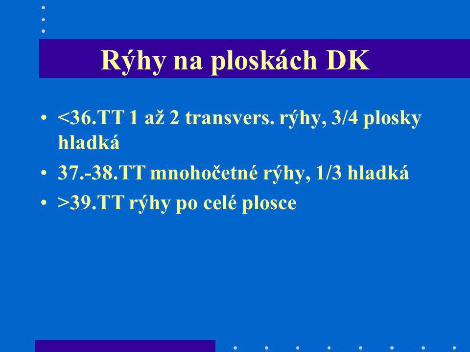 Rýhy na ploskách DK <36.TT 1 až 2 transvers. rýhy, 3/4 plosky hladká. 37.-38.TT mnohočetné rýhy, 1/3 hladká.