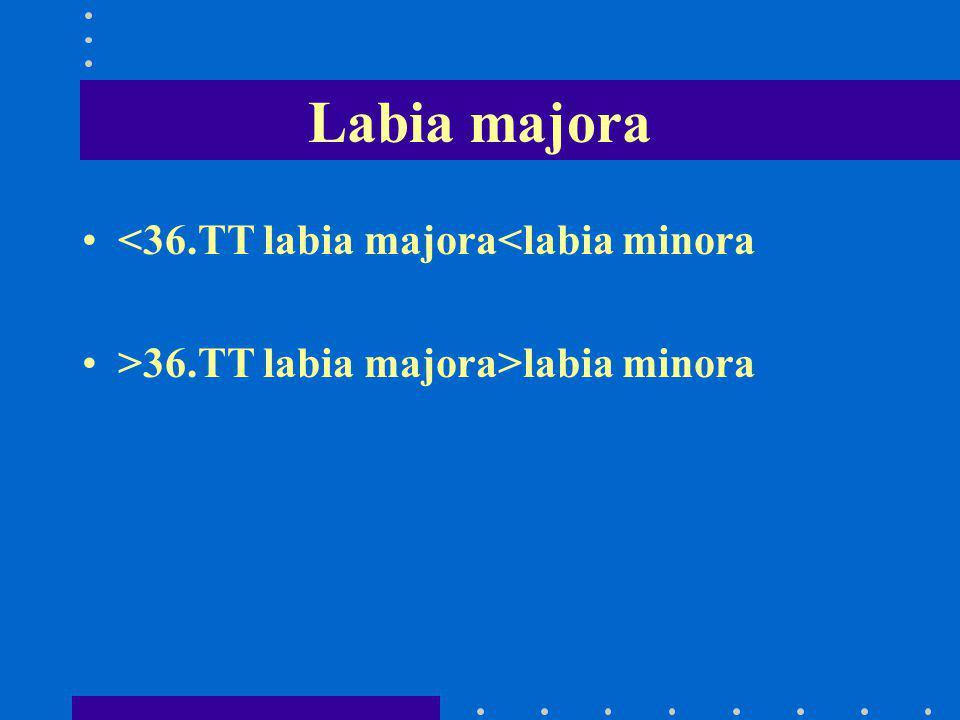 Labia majora <36.TT labia majora<labia minora